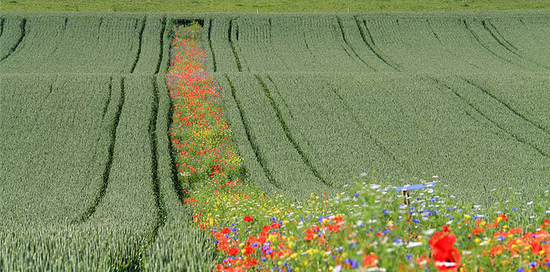 agriculture WITHOUT                                           pesticides: e.g. bloom strips